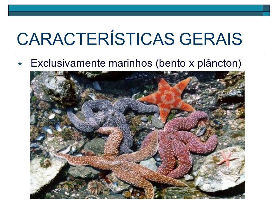 CARACTERÍSTICAS GERAIS Exclusivamente marinhos (bento x plâncton)