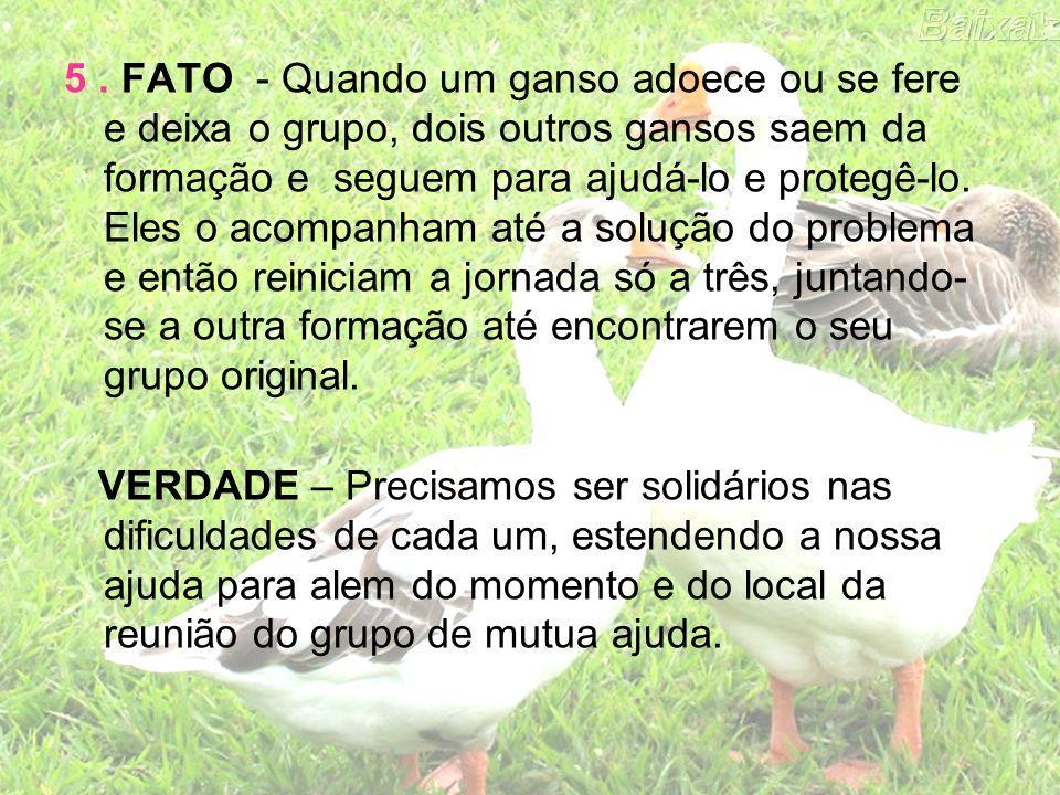 5. FATO - Quando um ganso adoece ou se fere e deixa o grupo, dois outros gansos saem da formação e seguem para ajudá-lo e protegê-lo. Eles o acompanha