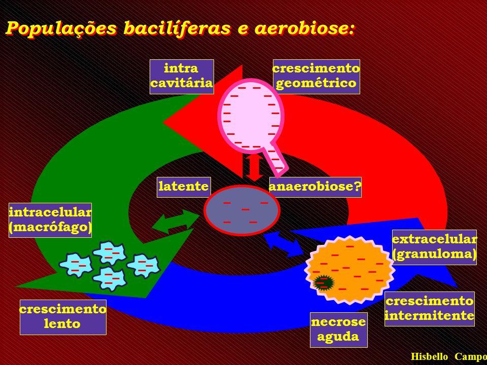 intracelular (macrófago) crescimento lento extracelular (granuloma) crescimento intermitente necrose aguda latenteanaerobiose? Populações bacilíferas