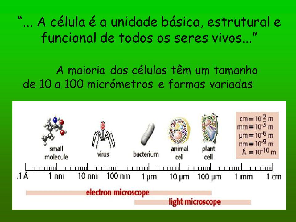 ... A célula é a unidade básica, estrutural e funcional de todos os seres vivos... A maioria das células têm um tamanho de 10 a 100 micrómetros e form