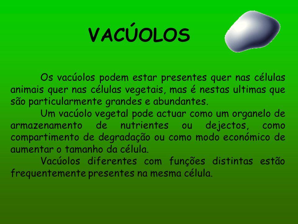 VACÚOLOS Os vacúolos podem estar presentes quer nas células animais quer nas células vegetais, mas é nestas ultimas que são particularmente grandes e abundantes.