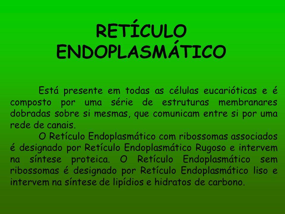 RETÍCULO ENDOPLASMÁTICO Está presente em todas as células eucarióticas e é composto por uma série de estruturas membranares dobradas sobre si mesmas, que comunicam entre si por uma rede de canais.