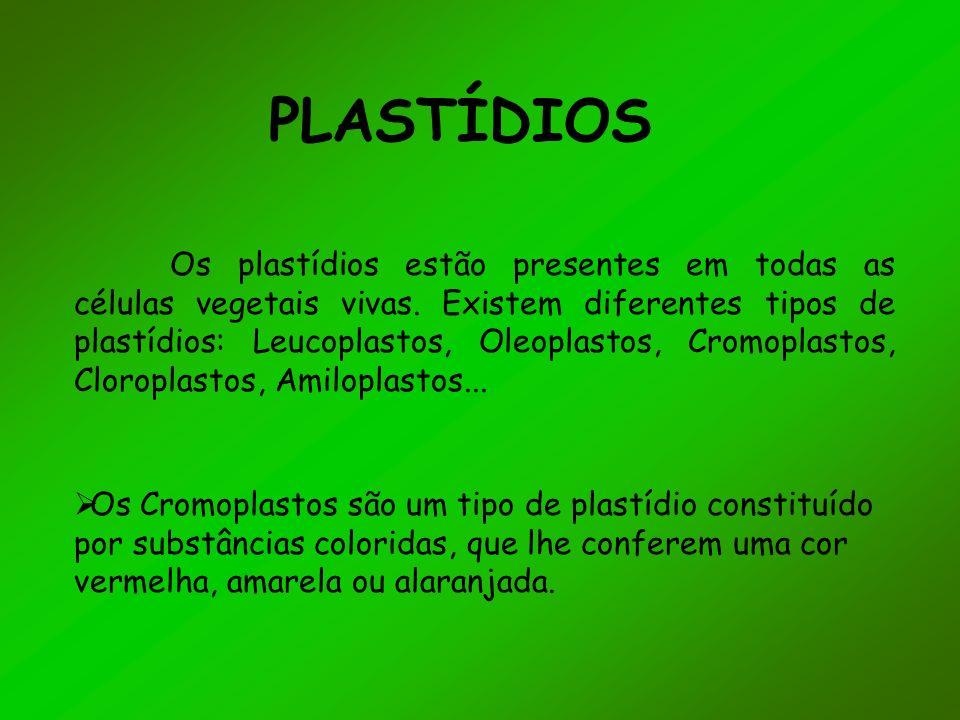 PLASTÍDIOS Os plastídios estão presentes em todas as células vegetais vivas.