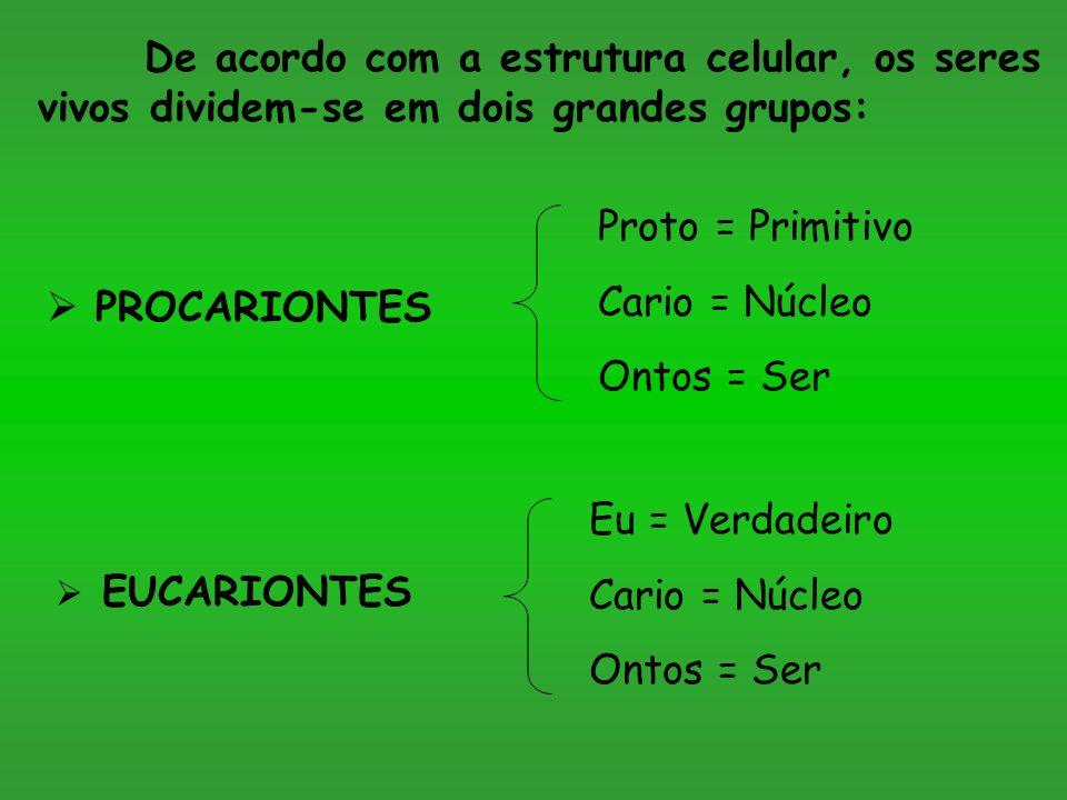 De acordo com a estrutura celular, os seres vivos dividem-se em dois grandes grupos: PROCARIONTES EUCARIONTES Proto = Primitivo Cario = Núcleo Ontos = Ser Eu = Verdadeiro Cario = Núcleo Ontos = Ser