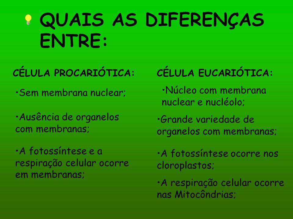 QUAIS AS DIFERENÇAS ENTRE: A fotossíntese e a respiração celular ocorre em membranas; A fotossíntese ocorre nos cloroplastos; A respiração celular ocorre nas Mitocôndrias; CÉLULA PROCARIÓTICA:CÉLULA EUCARIÓTICA: Sem membrana nuclear; Ausência de organelos com membranas; Núcleo com membrana nuclear e nucléolo; Grande variedade de organelos com membranas;