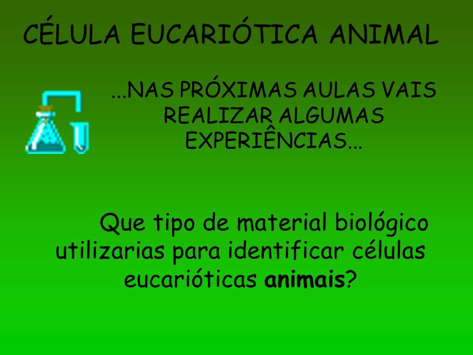 CÉLULA EUCARIÓTICA ANIMAL...NAS PRÓXIMAS AULAS VAIS REALIZAR ALGUMAS EXPERIÊNCIAS... Que tipo de material biológico utilizarias para identificar célul