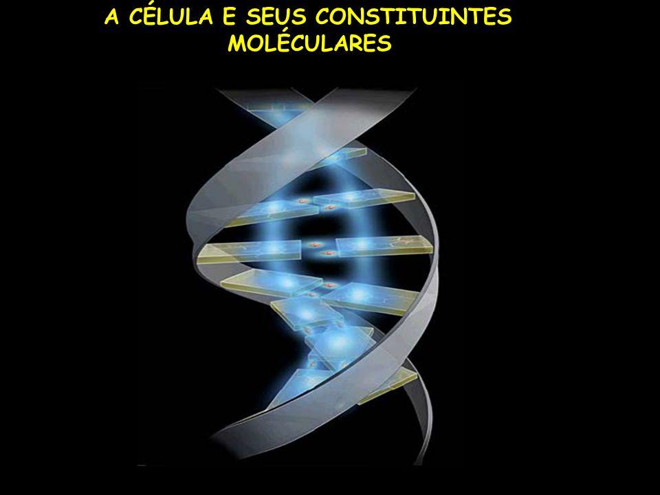 A CÉLULA E SEUS CONSTITUINTES MOLÉCULARES