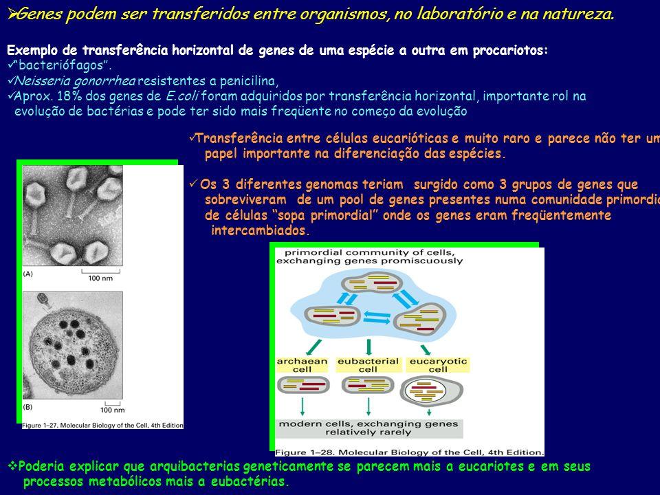 Genes podem ser transferidos entre organismos, no laboratório e na natureza. Exemplo de transferência horizontal de genes de uma espécie a outra em pr