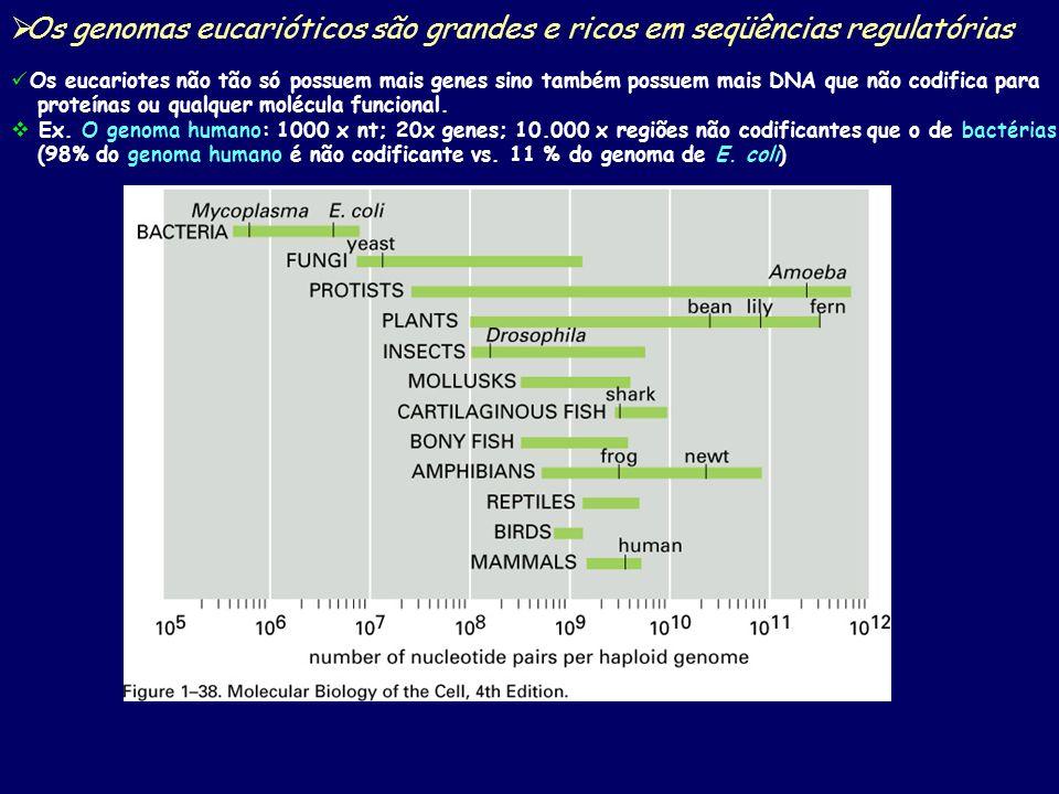 Os genomas eucarióticos são grandes e ricos em seqüências regulatórias Os eucariotes não tão só possuem mais genes sino também possuem mais DNA que não codifica para proteínas ou qualquer molécula funcional.