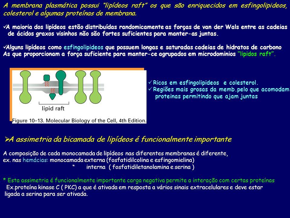 A membrana plasmática possui lipídeos raft os que são enriquecidos em esfingolipideos, colesterol e algumas proteínas de membrana. A maioria dos lipíd