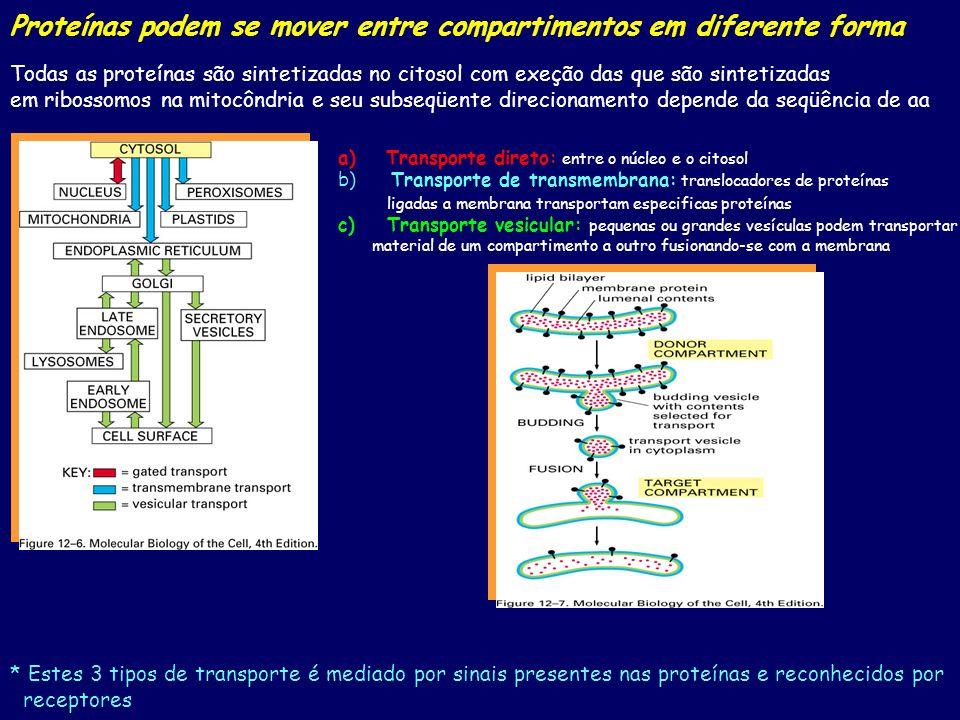 Proteínas podem se mover entre compartimentos em diferente forma Todas as proteínas são sintetizadas no citosol com exeção das que são sintetizadas em ribossomos na mitocôndria e seu subseqüente direcionamento depende da seqüência de aa a)Transporte direto: entre o núcleo e o citosol b) Transporte de transmembrana: translocadores de proteínas ligadas a membrana transportam especificas proteínas c) Transporte vesicular: pequenas ou grandes vesículas podem transportar material de um compartimento a outro fusionando-se com a membrana * Estes 3 tipos de transporte é mediado por sinais presentes nas proteínas e reconhecidos por receptores