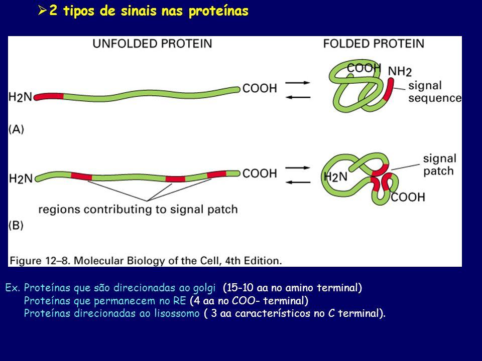 2 tipos de sinais nas proteínas Ex. Proteínas que são direcionadas ao golgi (15-10 aa no amino terminal) Proteínas que permanecem no RE (4 aa no COO-
