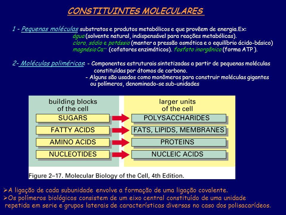 CONSTITUINTES MOLECULARES 1 - Pequenas moléculas substratos e produtos metabólicos e que provêem de energia.Ex: água (solvente natural, indispensável para reações metabólicas).