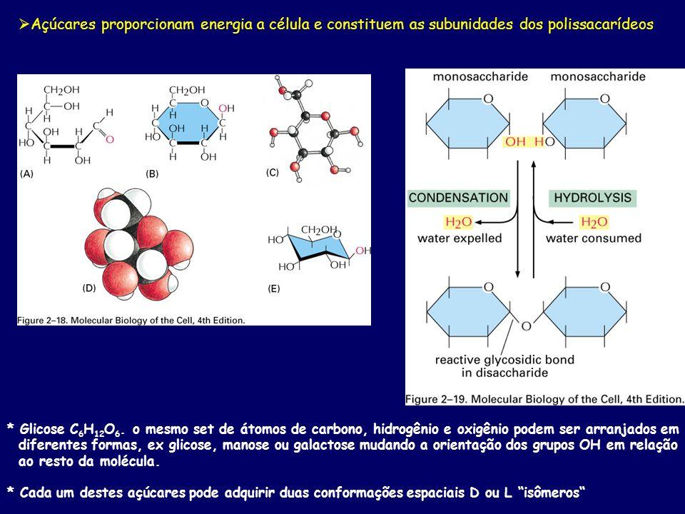 Açúcares proporcionam energia a célula e constituem as subunidades dos polissacarídeos * Glicose C 6 H 12 O 6. o mesmo set de átomos de carbono, hidro