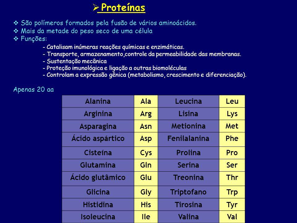 Proteínas São polímeros formados pela fusão de vários aminoácidos. Mais da metade do peso seco de uma célula Funções: - Catalisam inúmeras reações quí