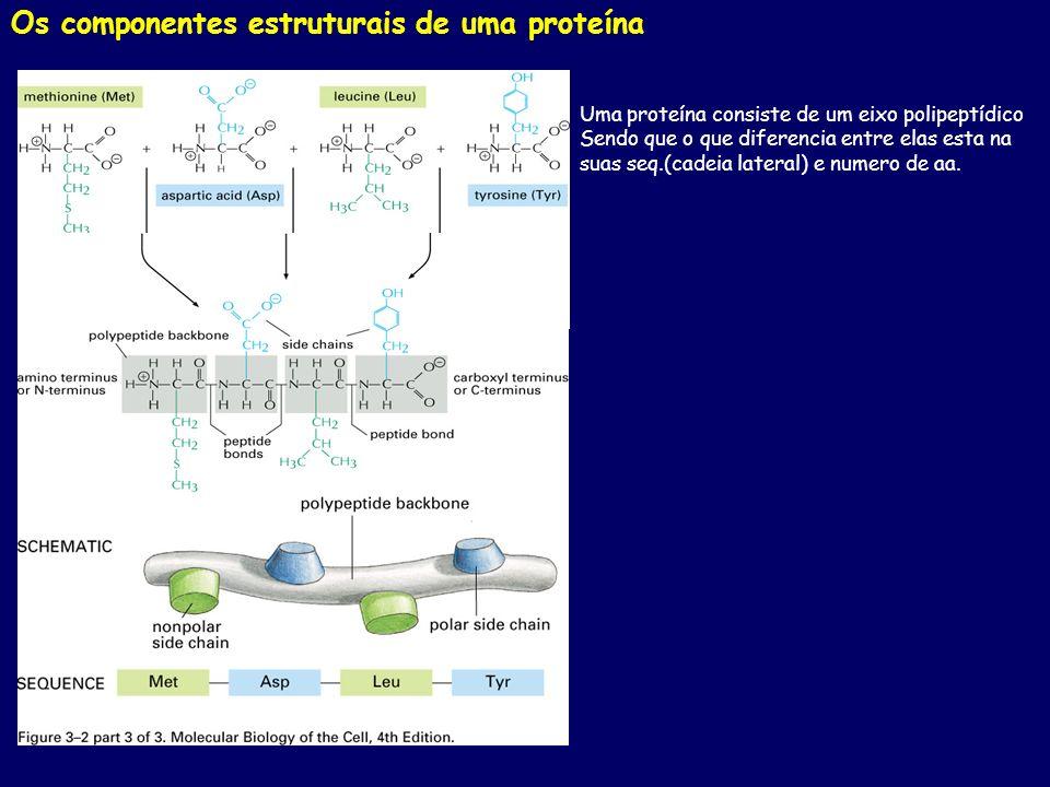 Os componentes estruturais de uma proteína Uma proteína consiste de um eixo polipeptídico Sendo que o que diferencia entre elas esta na suas seq.(cade
