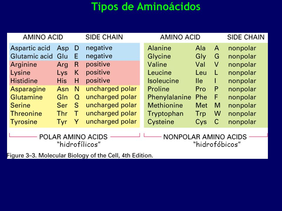 Tipos de Aminoácidos hidrofílicoshidrofóbicos