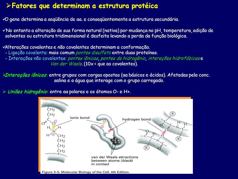 O gene determina a seqüência de aa. e conseqüentemente a estrutura secundária. No entanto a alteração de sua forma natural (nativa) por mudança no pH,