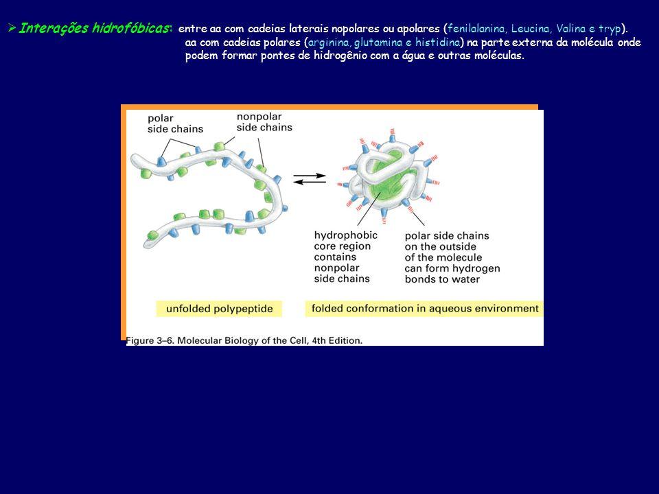 Interações hidrofóbicas: entre aa com cadeias laterais nopolares ou apolares (fenilalanina, Leucina, Valina e tryp).