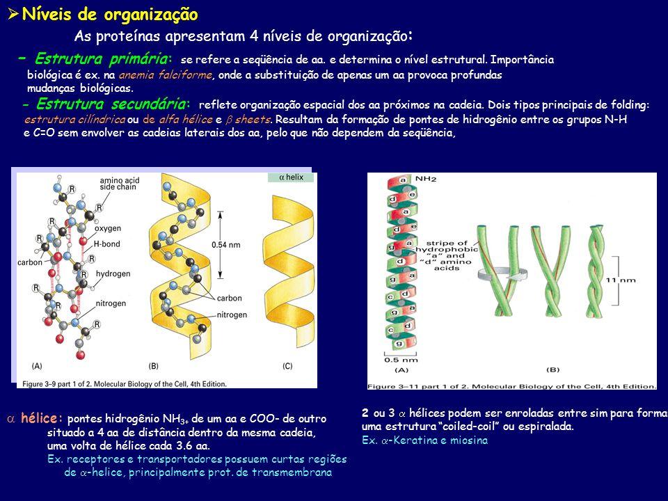 Níveis de organização As proteínas apresentam 4 níveis de organização : - Estrutura primária: se refere a seqüência de aa. e determina o nível estrutu