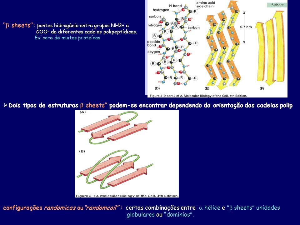 Dois tipos de estruturas sheets podem-se encontrar dependendo da orientação das cadeias polip sheets: pontes hidrogênio entre grupos NH3+ e COO- de diferentes cadeias polipeptídicas.