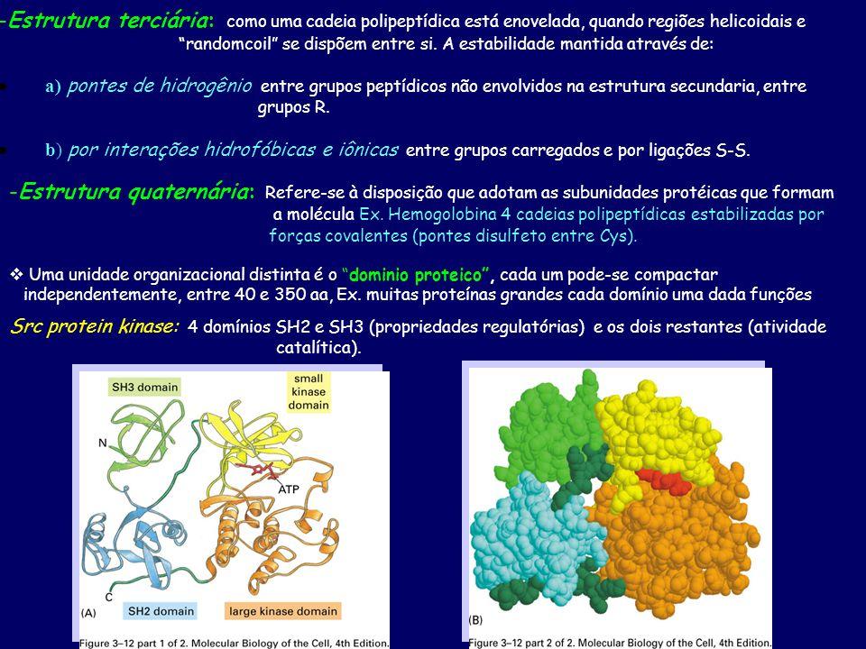 -Estrutura terciária: como uma cadeia polipeptídica está enovelada, quando regiões helicoidais e randomcoil se dispõem entre si. A estabilidade mantid