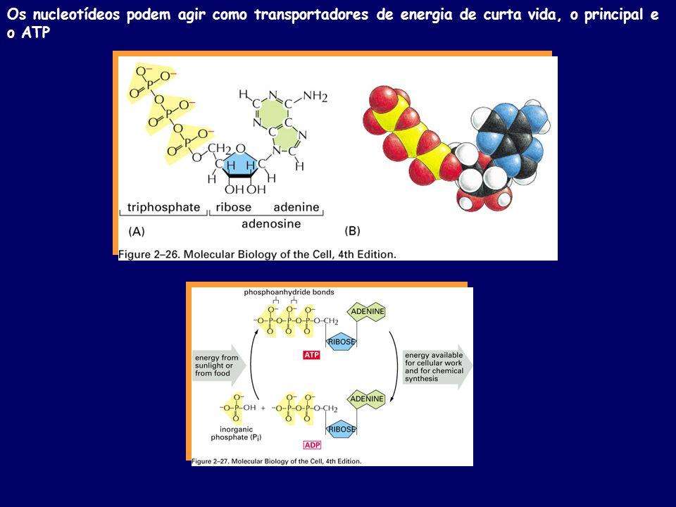 Os nucleotídeos podem agir como transportadores de energia de curta vida, o principal e o ATP