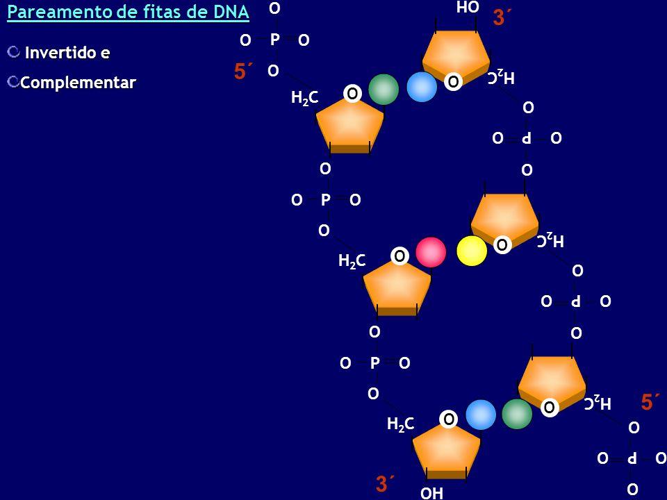 Pareamento de fitas de DNA OH O H2CH2C P O OO O O H2CH2C P O OO O O H2CH2C P O OO O O H2CH2C P O OO O O H2CH2C P O OO O O H2CH2C P O OO O 3´ 5´ Invertido e Invertido eComplementar