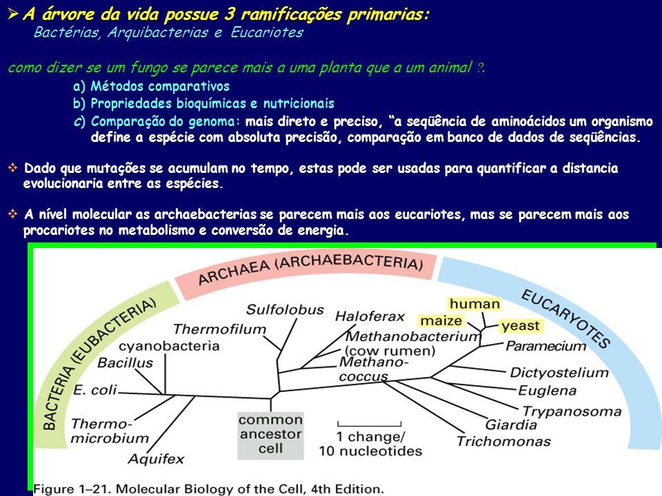 A árvore da vida possue 3 ramificações primarias: Bactérias, Arquibacterias e Eucariotes como dizer se um fungo se parece mais a uma planta que a um animal.