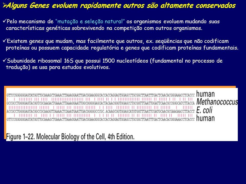 Alguns Genes evoluem rapidamente outros são altamente conservados Pelo mecanismo de mutação e seleção natural os organismos evoluem mudando suas carac