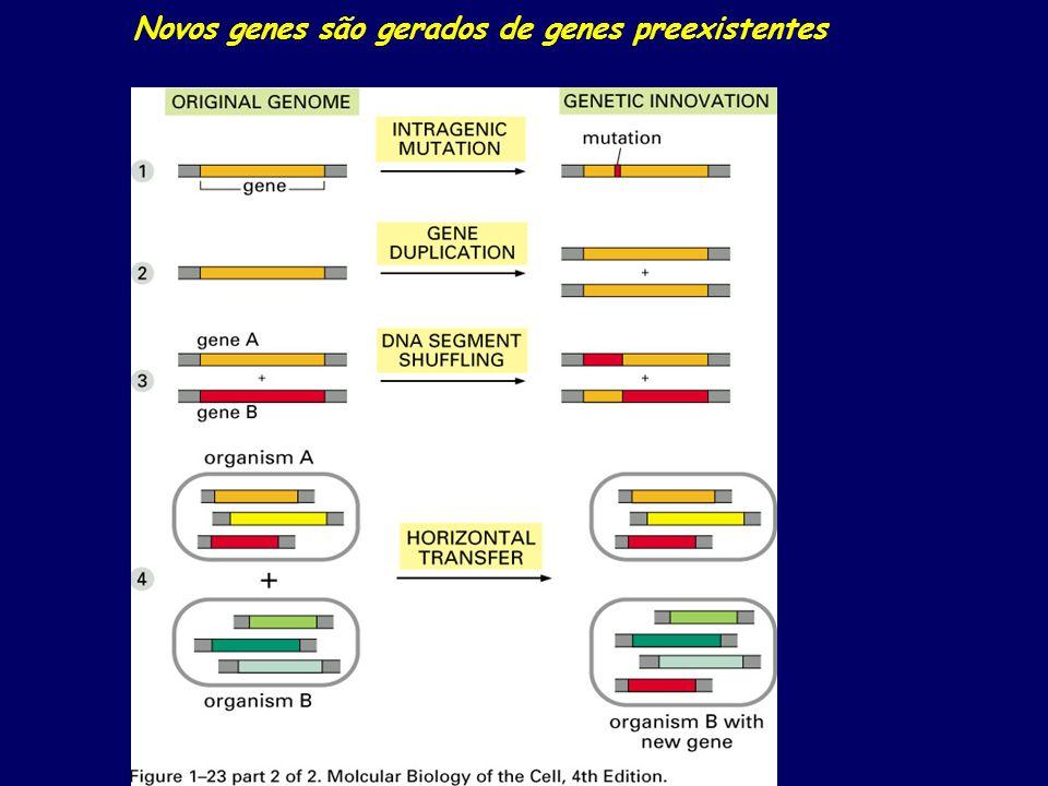 Novos genes são gerados de genes preexistentes