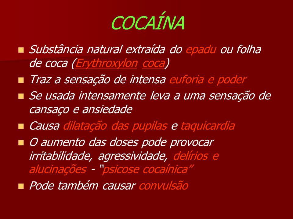 COCAÍNA Substância natural extraída do epadu ou folha de coca (Erythroxylon coca) Traz a sensação de intensa euforia e poder Se usada intensamente leva a uma sensação de cansaço e ansiedade Causa dilatação das pupilas e taquicardia O aumento das doses pode provocar irritabilidade, agressividade, delírios e alucinações - psicose cocaínica Pode também causar convulsão