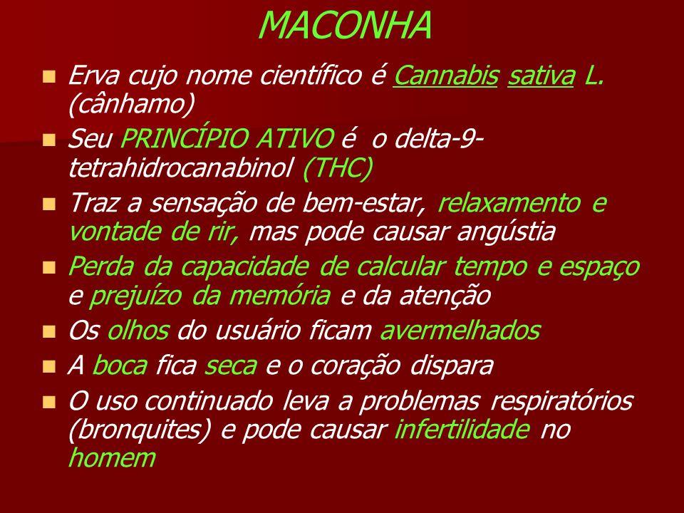 MACONHA Erva cujo nome científico é Cannabis sativa L.