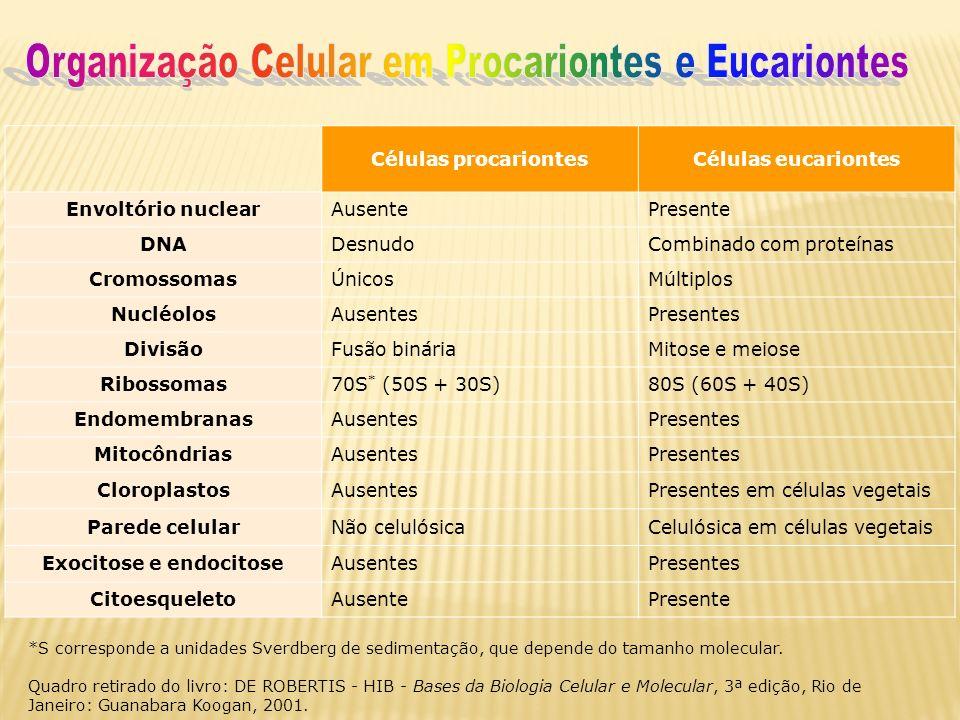 Células procariontesCélulas eucariontes Envoltório nuclearAusentePresente DNADesnudoCombinado com proteínas CromossomasÚnicosMúltiplos NucléolosAusent