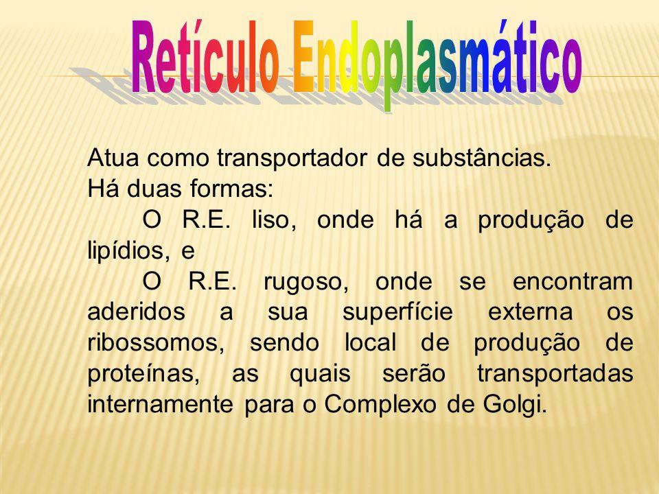 Atua como transportador de substâncias. Há duas formas: O R.E. liso, onde há a produção de lipídios, e O R.E. rugoso, onde se encontram aderidos a sua