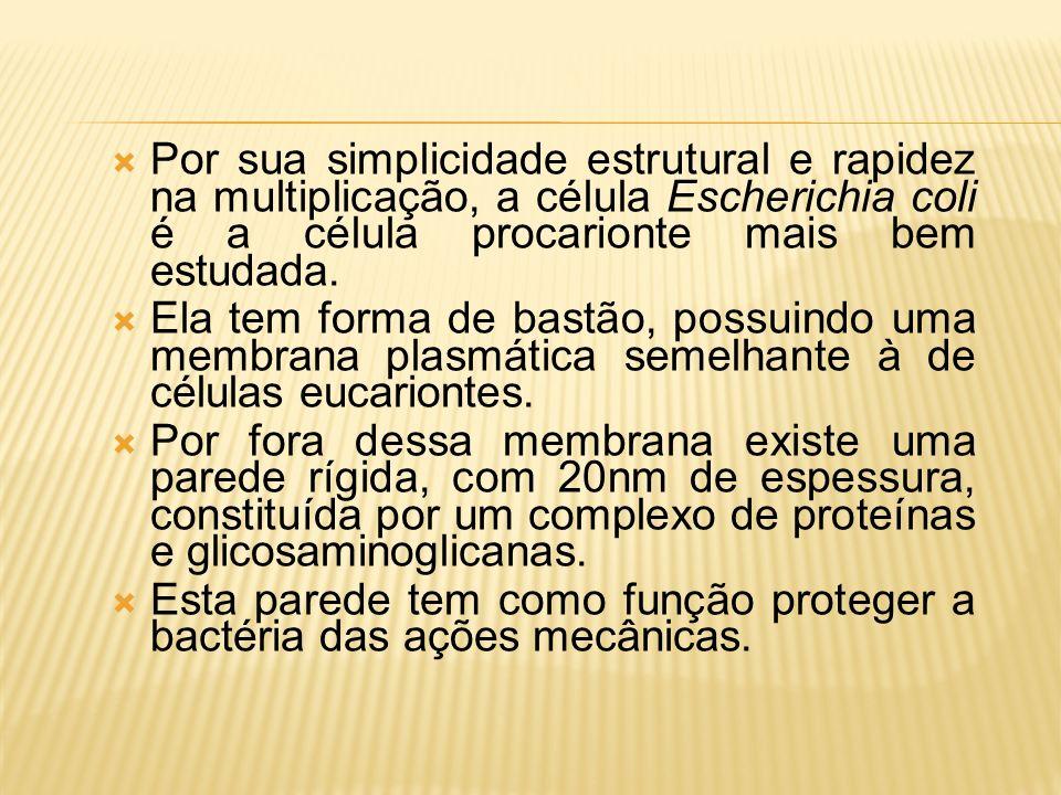 Fonte:www.cynara.com.br