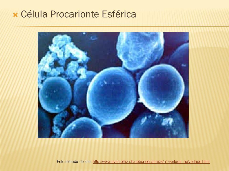 Célula Procarionte em Forma de Bastonete Foto retirada do site: http://www.terravista.pt/ilhadomel/3679/bacteria.htmlhttp://www.terravista.pt/ilhadomel/3679/bacteria.html