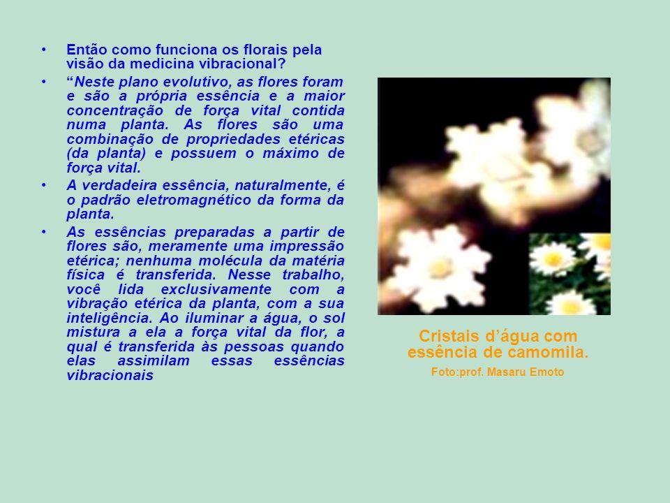 Então como funciona os florais pela visão da medicina vibracional? Neste plano evolutivo, as flores foram e são a própria essência e a maior concentra