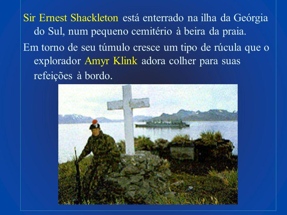 Sir Ernest Shackleton está enterrado na ilha da Geórgia do Sul, num pequeno cemitério à beira da praia. Em torno de seu túmulo cresce um tipo de rúcul