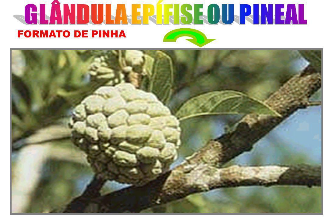 FORMATO DE PINHA