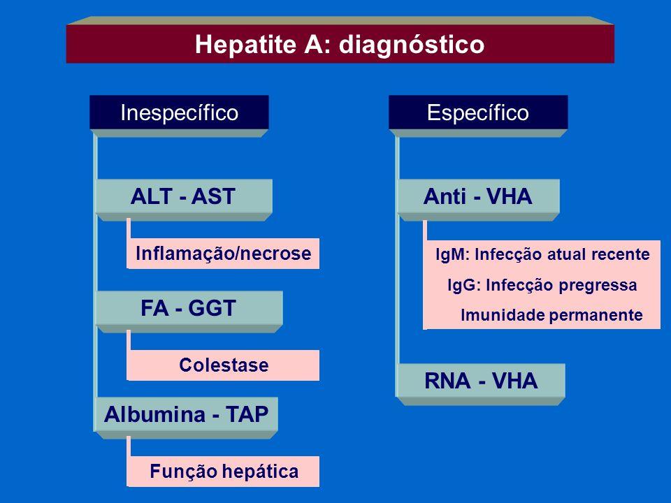 Hepatite A: diagnóstico InespecíficoEspecífico ALT - AST FA - GGT Albumina - TAP Inflamação/necrose Colestase Função hepática Anti - VHA RNA - VHA IgM