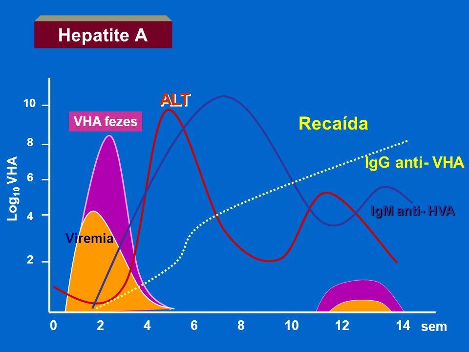 IgM anti- HVA VHA fezes 0 2 4 6 8 10 12 14 IgG anti- VHA sem Hepatite A Viremia ALT Recaída 2 4 6 8 10 Log 10 VHA