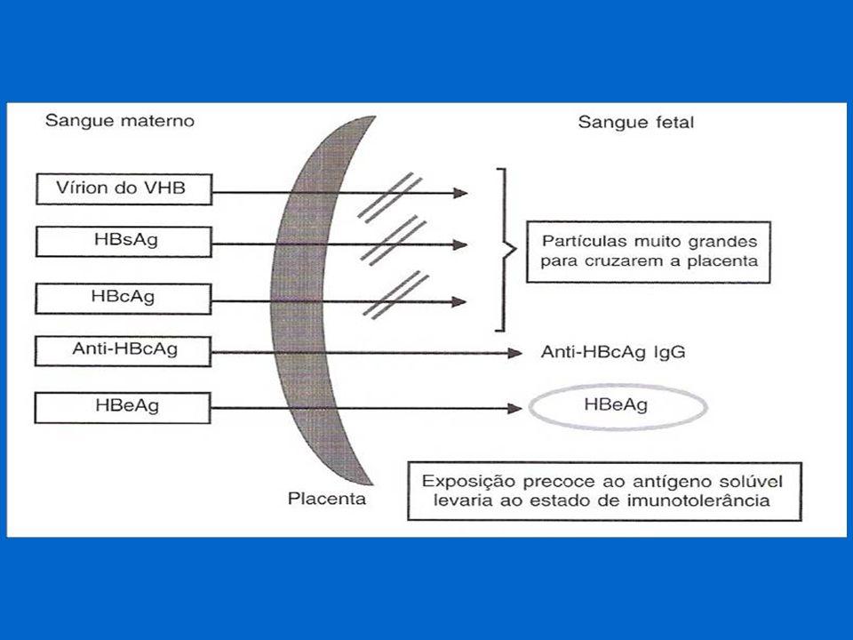Mãe AgHBs +, AgHBe +, DNA+ risco de infecção- 90% 80-90% - portador crônico Mãe AgHBs +, anti-HBe +, DNA - risco de infecção- 10-30% alto risco de HA