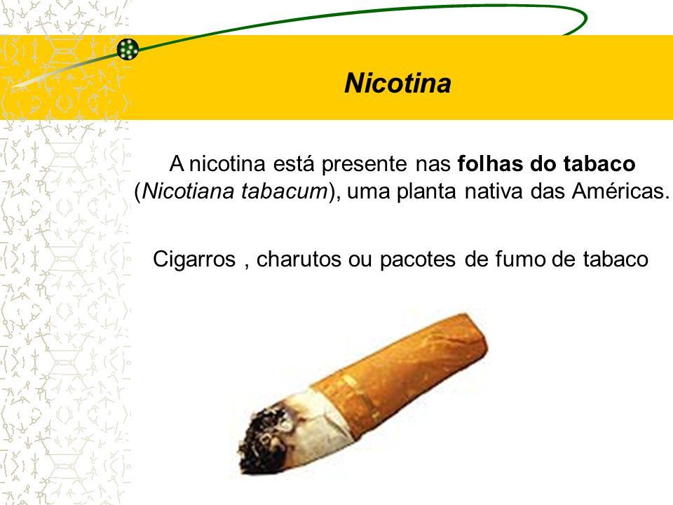 Nicotina A nicotina está presente nas folhas do tabaco (Nicotiana tabacum), uma planta nativa das Américas. Cigarros, charutos ou pacotes de fumo de t