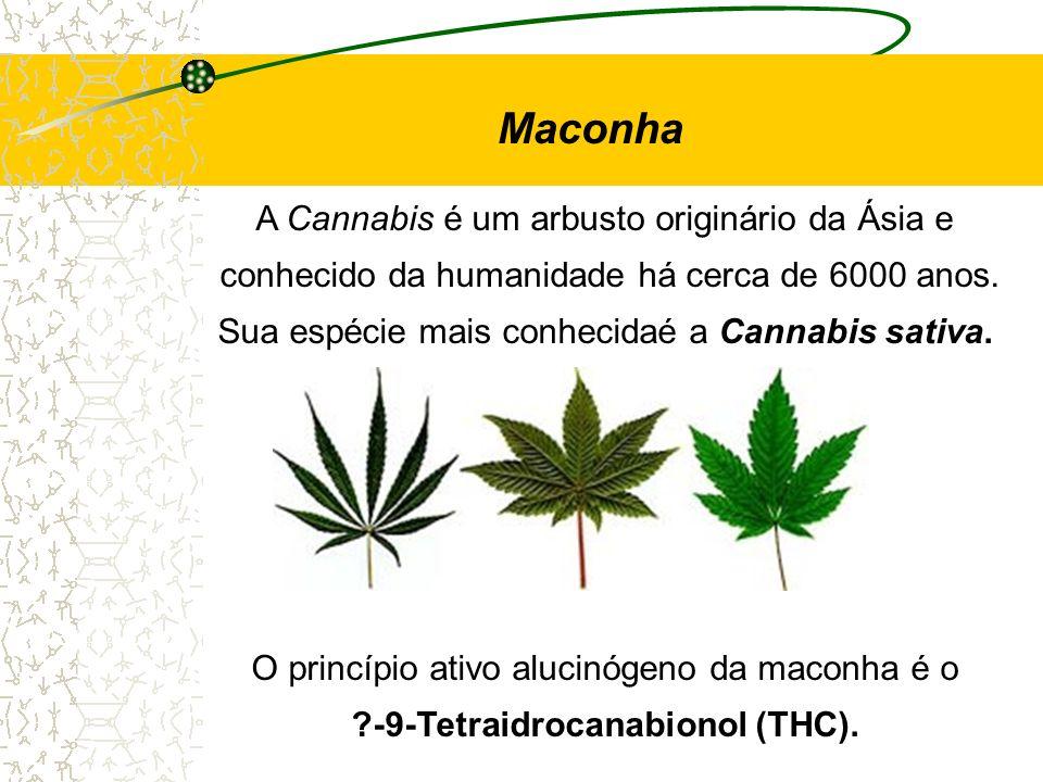 A Cannabis é um arbusto originário da Ásia e conhecido da humanidade há cerca de 6000 anos. Sua espécie mais conhecidaé a Cannabis sativa. O princípio
