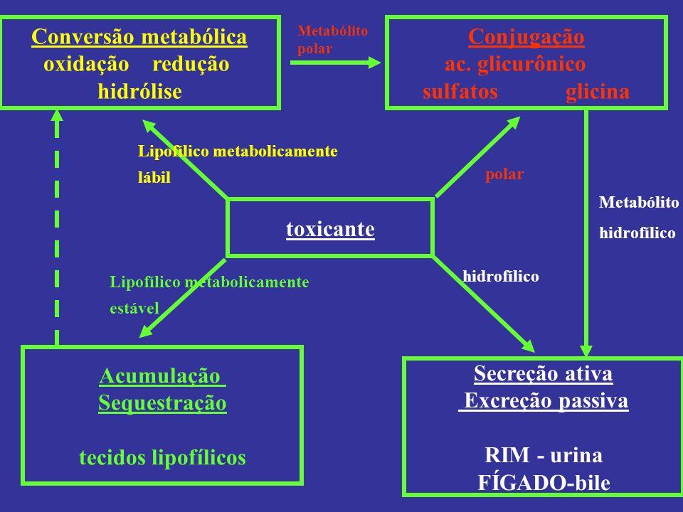 toxicante Lipofílico metabolicamente lábil polar hidrofílico Lipofílico metabolicamente estável Conversão metabólica oxidação redução hidrólise Conjug