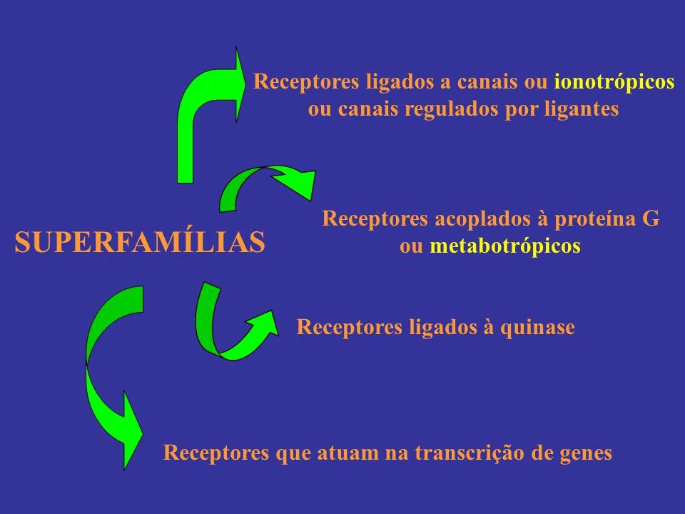 SUPERFAMÍLIAS Receptores ligados a canais ou ionotrópicos ou canais regulados por ligantes Receptores acoplados à proteína G ou metabotrópicos Recepto
