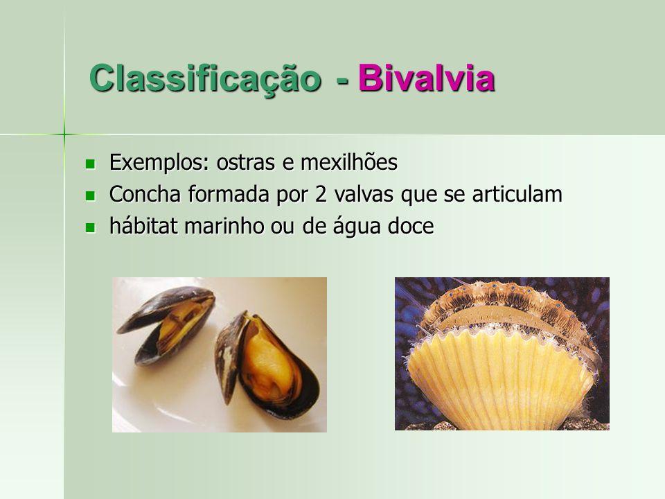 Classificação - Bivalvia Exemplos: ostras e mexilhões Exemplos: ostras e mexilhões Concha formada por 2 valvas que se articulam Concha formada por 2 v