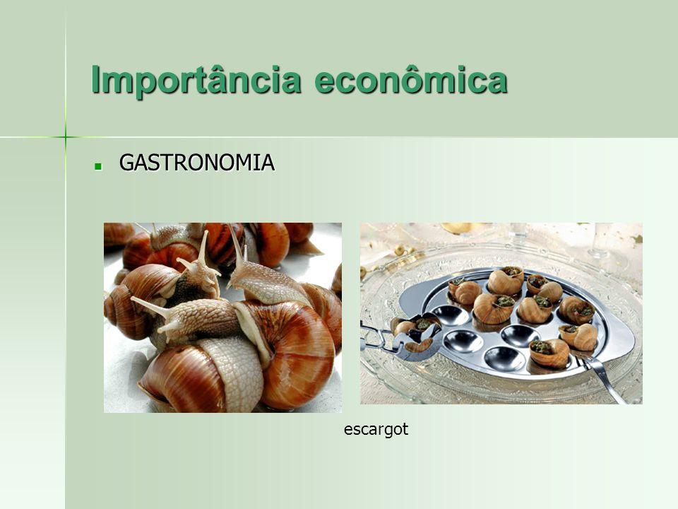 escargot Importância econômica GASTRONOMIA GASTRONOMIA