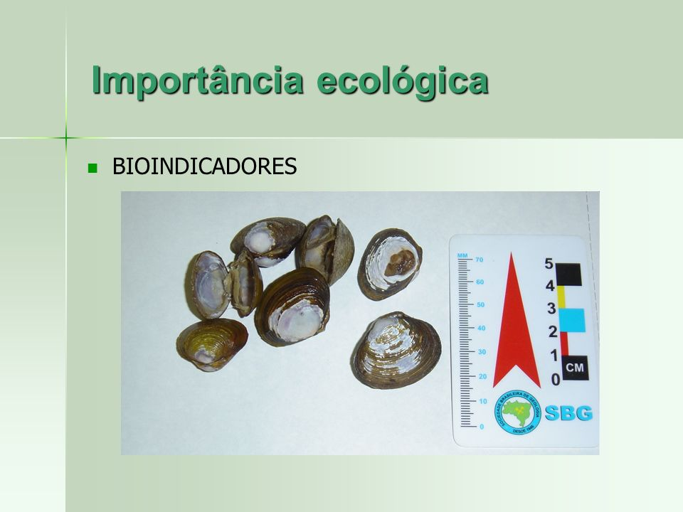 BIOINDICADORES Importância ecológica